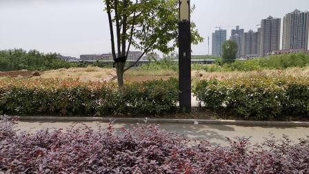 20200514 114501 阳安线客车K767次列车进汉中站