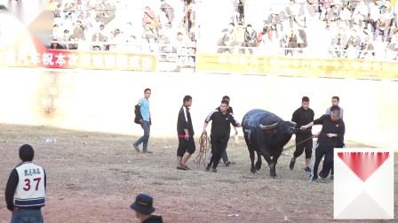 伊拉克获石林彝族第一村野牛组冠军拉克