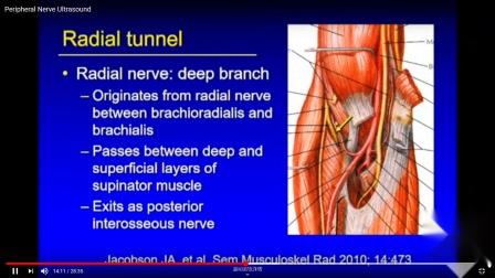 外周神经超声 2018 Peripheral Nerve Ultrasound