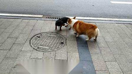 20201125-1420土豆狗(文林街)【1080p】--19秒★★★★★