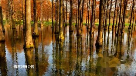 水上森林别样美   4k