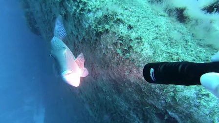 OrcaTorch虎鲸 D700海底探险照明 水下摄影灯