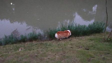 202011021820湿地公园【720p】--51★★★★★