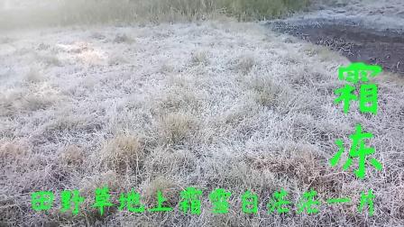 霜冻 田野草地霜雪上白茫茫一片
