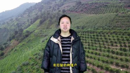 柑橘冬天如何施肥 源沃肥业小崔来告诉你