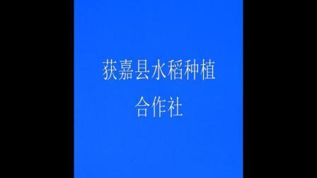 获嘉县水稻种植合作
