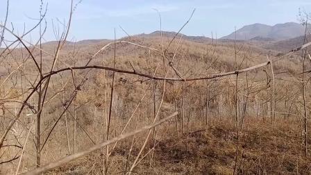 陶公风水·2020·冬·分享在河南驻马店寻到的一个风水宝地!
