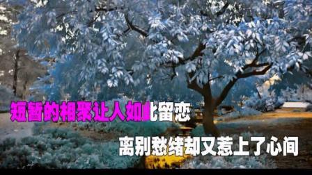 舍不得和你说再见(演唱)梅朵 福厚合成.mpg