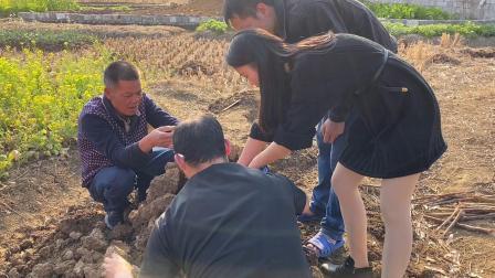 大年初二吃完饭,去田地里窑红薯窑鸡,还是小时候的味道非常好吃