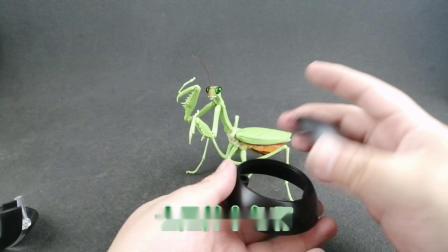 钟爱评测 扭蛋盲盒 第723期 万代出品昆虫可动扭蛋螳螂