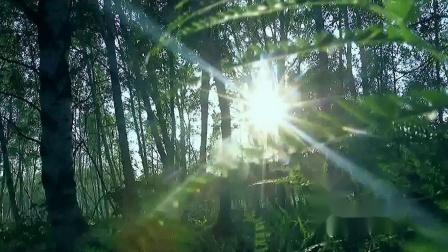 你是一棵树(刘亚芹演唱  徐文桦词  崔 虹曲  邓乔文编曲  刁夫出品)