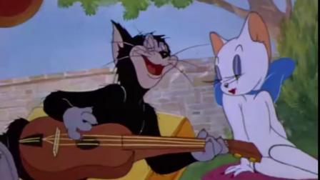 猫和老鼠:这女孩长得太美,不止汤姆在追求她,还有好多猫追她呢