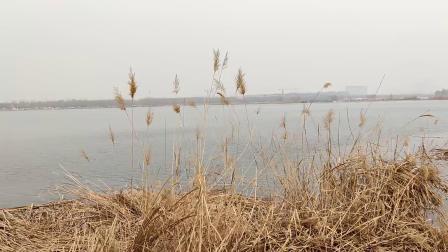 滹沱河畔-初春