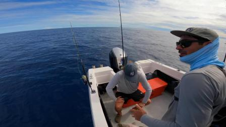 Jigging The worlds most Beautiful Fish