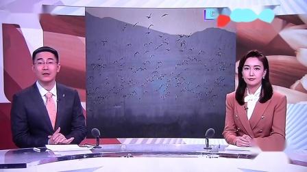 黑豹野保站 BTV生活 2021春季官厅候鸟迁徙 .mov