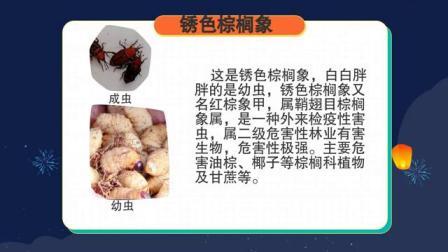 禁止养殖锈色棕榈象宣传短片