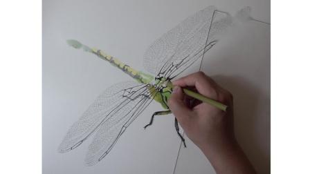 何海洋彩铅蜻蜓教学视频,何海洋彩铅基础教程一本通包含更多精彩内容