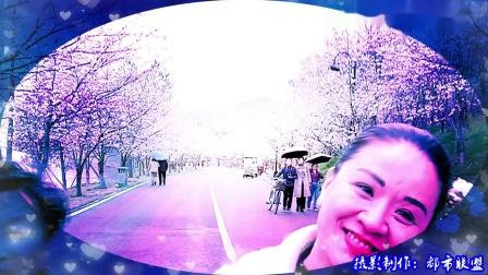 《双脚蹈上幸福路》观赏团城山公园樱花