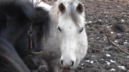 驯骑小马日记,每天一骑