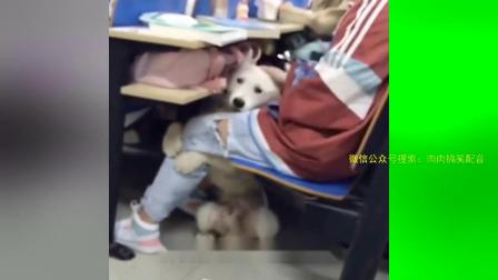 93_1_94_都说单身狗,哪个单身狗有它幸福#配音#搞笑配音