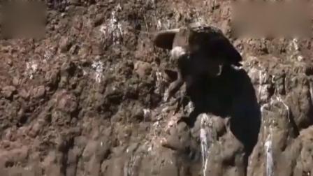 鳄鱼岸上晒太阳,被秃鹫当成死尸,下一幕惨了