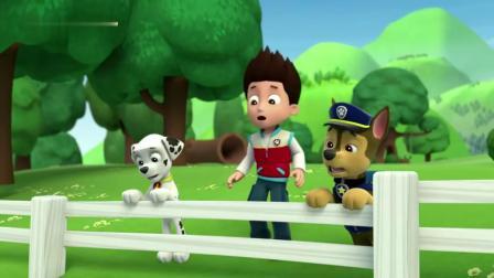 汪汪队:毛毛去捡球,遇到了被困在树上的小狗,真可怜