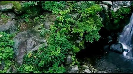 古琴箫《茶花乐谷》