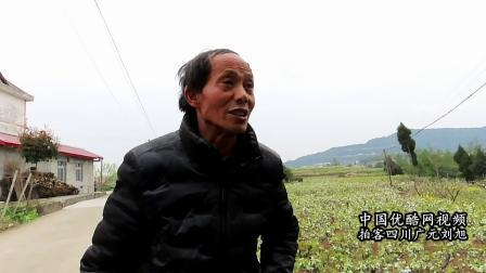 2021广元蜀之道自驾游乡村消费促振兴四川省苍溪县运山镇梨花行