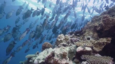 专业潜水手电筒照明灯高亮度10500流明 科技感十足的水下摄影灯-OrcaTorch潜水