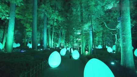直立并呼应的生命和呼应之巨杉林 / Autonomous Resonating Life and Resonating Giant Cedar Forest