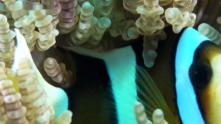 影视界关于潜水摄影最美海底世界|OrcaTorch潜水