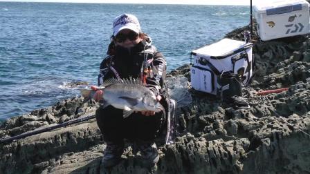 (矶钓) 春天的鱼种 黑鲷与赤立