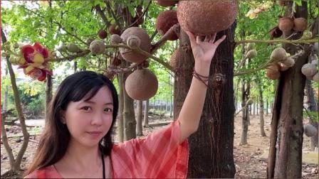 越南歌曲音乐dem lao xao