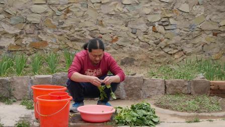 朱坤 择洗菠菜