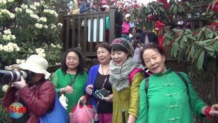 贵州旅游之四(百里杜鹃开满山)