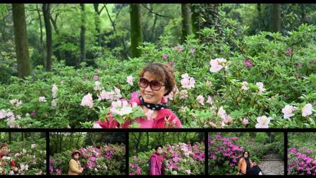 我爱磨山的杜鹃花