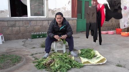 朱坤 择菠菜