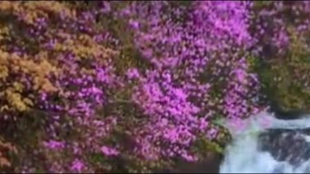 古琴《春来花自香》