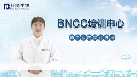 荧光定量PCR扩增技术