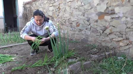 朱坤栽葱我的小菜园