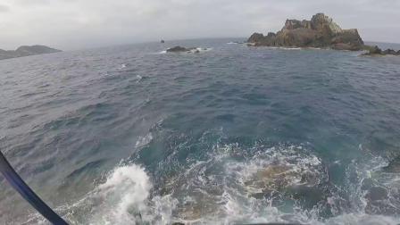 (矶钓) 鹈来岛之巨大尾长黑毛
