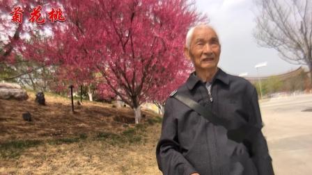 北京市延庆世博园内的菊花桃