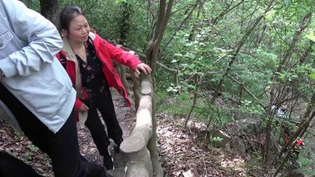 大口国家森林公园之韵