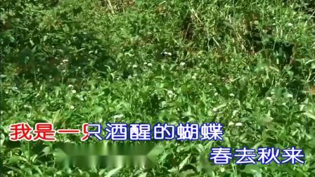 酒醒的蝴蝶 - 龙江辉  KTV歌词版  DJ