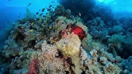 人和鱼的浪漫邂逅,给你带来美好的水下摄影之旅|OrcaTorch潜水