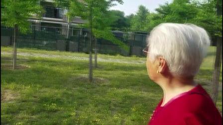 安宁走基层:84岁婆婆眼睛不好,手术前陪着婆婆来到了滨河公园散散步.mpg