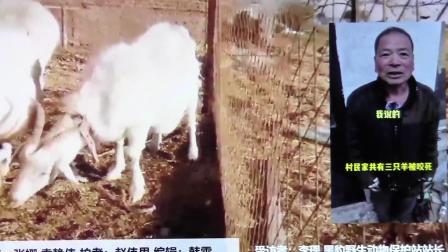 黑豹野保站 新京报 齐齐哈尔见4只狼.mov