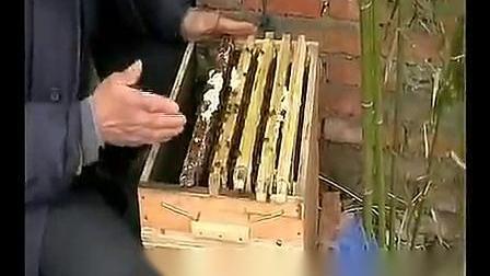组合箱养中蜂视频B-