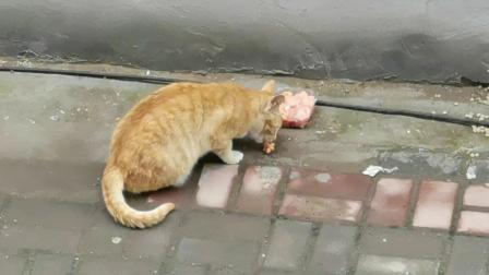 小猫咪总是优雅的吃每顿饭
