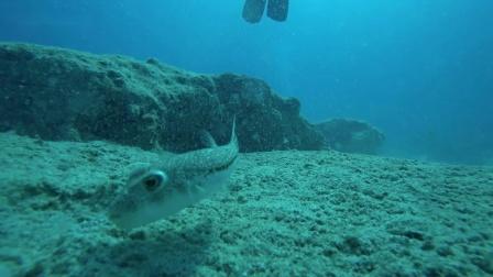 休闲潜水红光照明 水下体验 与小动物亲吻接触 OrcaTorch虎鲸